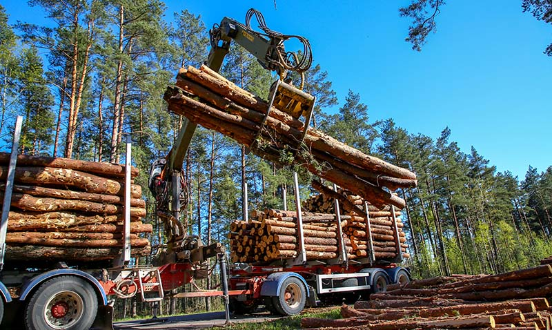 Crane in Forest Loading Logs in the Truck. Timber Harvesting and Transportation.